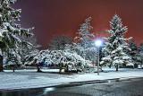 Spring Snow At Night P1090826-8