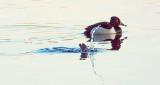 Taking A Dive DSCF19309