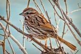Bird In The Bush P1100401