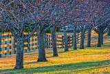 Horse Farm Fence At Sunrise 20150419