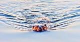 Swimming Beaver DSCF19624