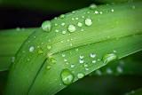 After A Rain P1110900