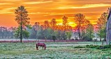 Grazing Horse At Sunrise P1120619