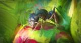 Ant On A Peony Bud 'Art' P1120860