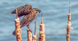 Bird With A Snack DSCF20569
