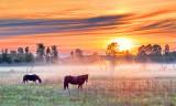 Two Horses In Misty Sunrise P1130907-9