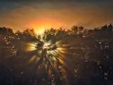 Shadow Side Of Trees In Sunrise Fog P1130963-5