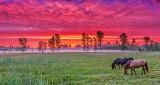 Horses In Sunrise P1140615-7