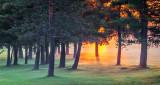 Pines In Misty Sunrise P1150478-80