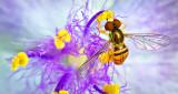 Ahh! Sweet Nectar P1150857