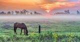 Equine Pal In Misty Sunrise P1160068-70