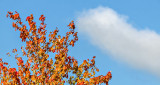 First Sign Of Autumn? DSCF4325