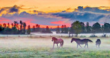 Equine Pals In Misty Sunrise P1170030.3