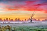 Dead Tree In Misty Sunrise P1170395-7