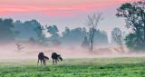 Two Horses In Misty Sunrise P1170842