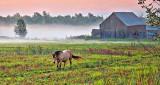 Equine Pal In Misty Sunrise 45662