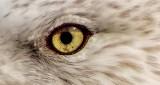 Gull Closeup DSCF4687 (crop)