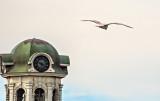 Gull In Flight_DSCF4696.jpg