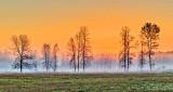 Trees In Sunrise Ground Fog P1180987-9
