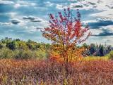 First Autumn Tree DSCF4823-5
