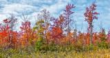 Autumn Landscape DSCF4942
