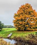 Autumnscape P1200186