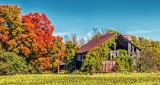 Autumn Collapsing Barn P1200323-5