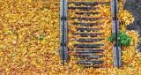 Leafy Stairs DSCF5138