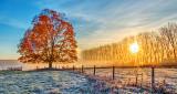 Autumn Tree In Sunrise P1210194-6