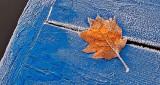 Frosty Autumn Leaf On A Frosty Dock P1210444-6