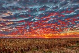 Cornfield Sunrise P1220182-7