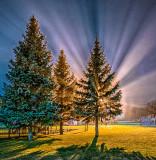 Victoria Park At Night P1230453-5