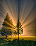 Victoria Park On A Foggy Night 47893-5