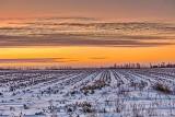 Winter Field Near Sunrise P1230884-6