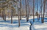 Snowscape P1240734-9