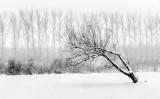 Snowy Leaning Tree P1010314-6