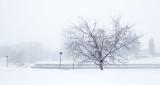 Snowstorm 20160216 (DSCF5896)