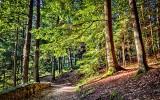 Hocking Hills Trail DSCF06270-2