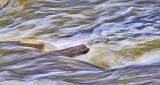 Log In Spring Runoff P1030860