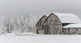 Barns In Spring Wonderland DSCF6589