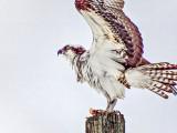 Stretching Osprey S0027155