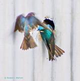 Swallow Photobomb DSCF8849