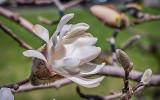 Spring Blossom P1050912