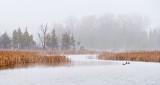 Otter Creek In Light Fog P1050975