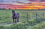 Equine Pal At Sunrise P1070206