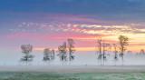 Trees In Sunrise Ground Fog P1070285-7