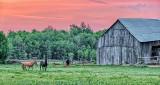 Horse Pasture At Sunrise P1070562-4