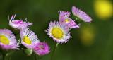 Wildflowers DSCF11154