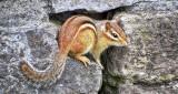 Chippie On The Rocks DSCF11385