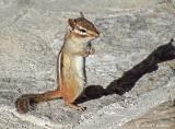 Chippie Standing At Attention DSCF12045